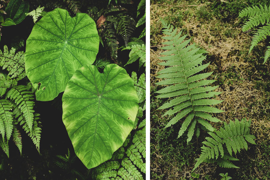 這張圖片的 alt 屬性值為空,它的檔案名稱為 liwu-plant.jpg